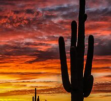 Desert Sunset - Salome, Arizona by Mary Warner
