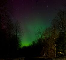 Auroras in the Woods by Megan Noble