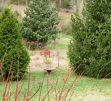 Garden Evergreens / GSMNP by JeffeeArt4u