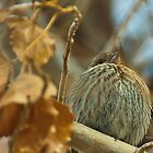 Lil Fluffer, Finch in Montana Winter by Donna Ridgway
