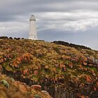 Cape Willoughby Lighthouse - Kangaroo Island, South Australia by Ian Berry