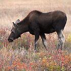 Moose Meadow by Ann  Van Breemen