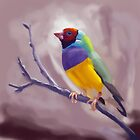 Gouldian Finch by Dan McKechnie