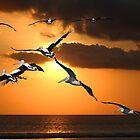 Pelican Sunset by byronbackyard
