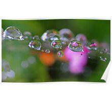 Garden Pearls Poster