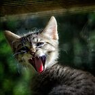 Ferocious Jungle Cat by Scott Allan