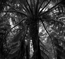 Scary Tree- Mount Lofty Botanic Gardens by Ben Loveday
