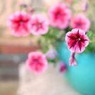Pink Patunia by Kelvin  Wong