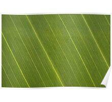Palm Tree Leaf Poster