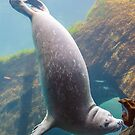 Harbor Seal by JagiShahani