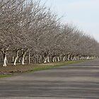 Winter Orchards by artinmyeyes
