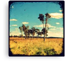 Eucalyptus Trees Through The Viewfinder (TTV) Canvas Print