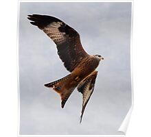 Red Kite Soaring in Sky Poster