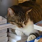 Bookshop Cat by Helen Greenwood