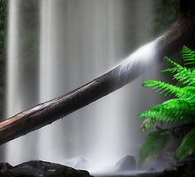 Rainforest Waterfall by Jill Fisher
