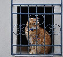 Cat in a Window by Helen Greenwood