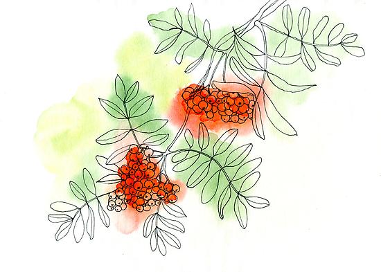 Rowan berry by Aleksandra Kabakova