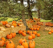 The Pumpkin Patch by Marilyn Cornwell