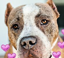 Pit Bull Dog - Pure Love by Sharon Cummings