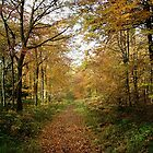 Woodland Autumn Path by Simon Harris