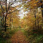Woodland Autumn Path by Simon Harris