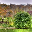 Country Scene by Monica M. Scanlan