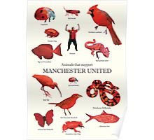Animals that support Manchester United  Poster