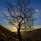 The Lonley Tree by ChrisChallenger