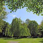 Tree landscape by Paul Boyle