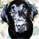 Black Labrador Retriever Dog Art by Sharon Cummings