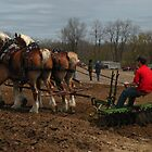 Tractor Pull by Liesl Gaesser