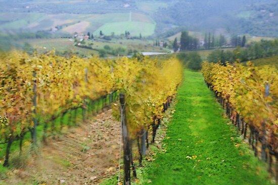 Lamole-Chianti-Toscany  by gluca