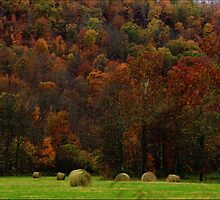 Autumn Harvest  by NatureGreeting Cards ©ccwri