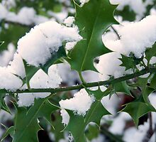 Snow covered holly by naturalnature