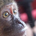 Monkey's Eyes by Kelvin779