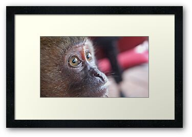 Monkey's Eyes by Kelvin779