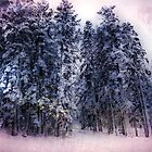 Winter Trees 3 by Dianne Phelps
