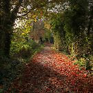 Autumn Moods by Ursula Rodgers