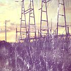 Powerlines by Mike Maher