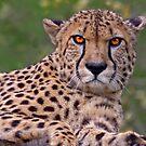 Look into my Eyes... by Krys Bailey