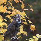 Bored Owl ~ by Renee Blake
