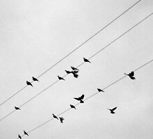 Happy on a wire by mezzluc