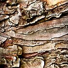 Tree Bark Abstract-iPad by onyonet photo studios