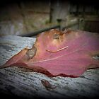 Red Autumn Leaf by alltherowboats