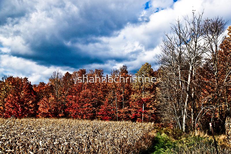 Autumn Day by shahnachristine