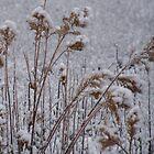 Snow Buds by JDToomer