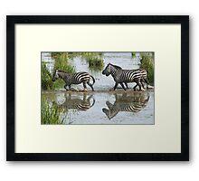 Follow the Leader, Zebra, Amboseli Framed Print