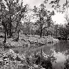 By the Creek - Crows Nest National Park - Australia by Norman Repacholi