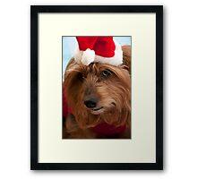 Skitsy at Christmas! Framed Print