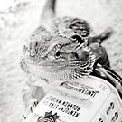 Jim Beam Dragon by Nickfree1
